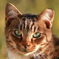 EarTipped Feral Cat